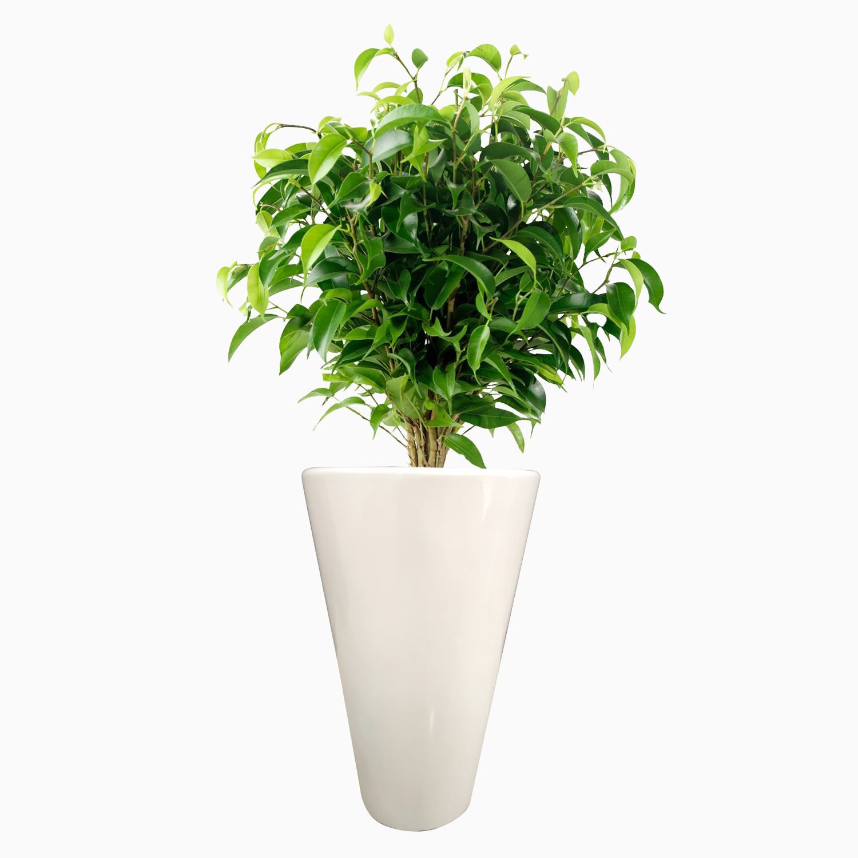 Coral 18 Plant