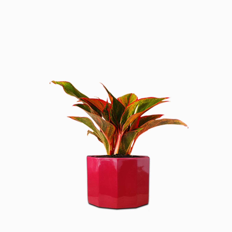 DODECAGON FRP PLANTER change plant